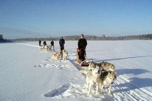 Kamisak Husky Safari and Horse Farm Lapland Finland