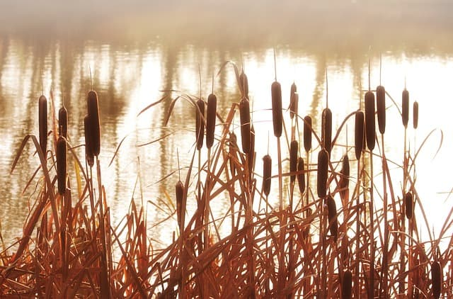 natuur in Nederland Biesbosch Drimmelen rondvaart