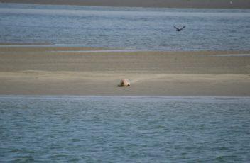 noordzee strand zeehond kijkduin scheveningen den haag